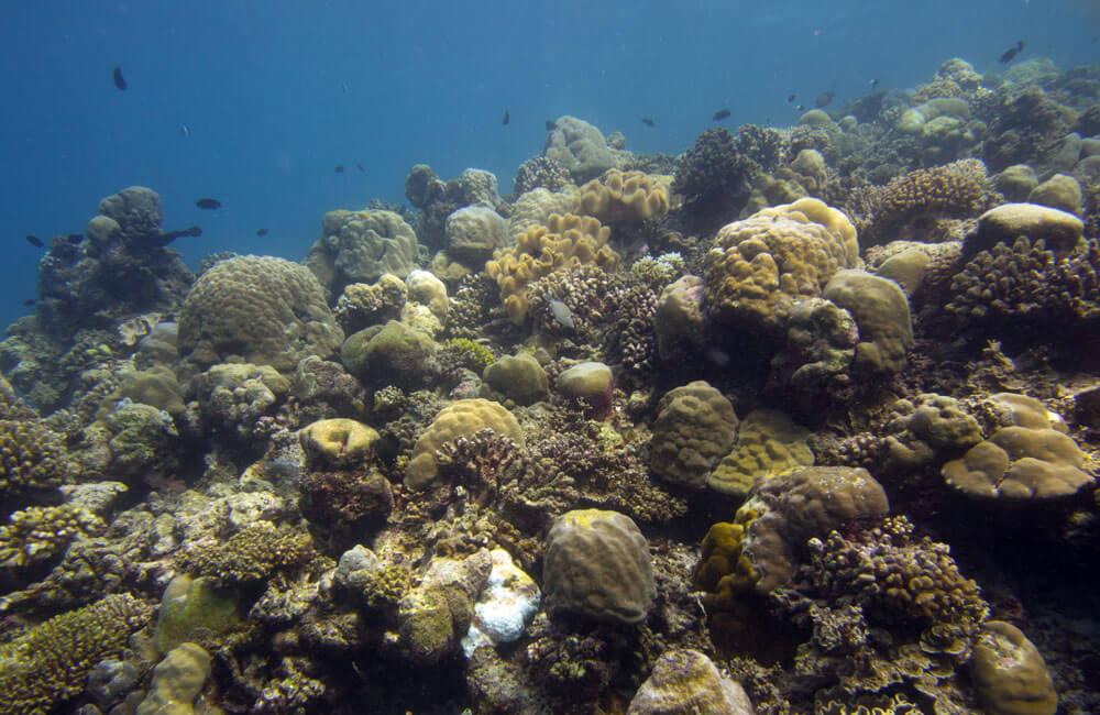 coral cpr radshoo1000